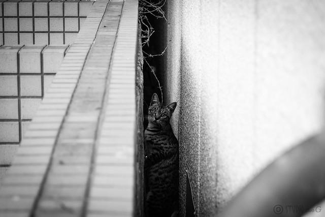 Today's Cat@2013-11-18
