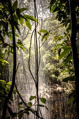 behind the waterfall (Andre Zuin) Tags: trees plants nature water waterfall natureza layers behind arvores cachoeira camadas