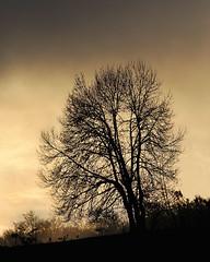 ORREAGA-Inguruak-01 (ikimilikili-klik) Tags: sunset tree contraluz atardecer rbol euskalherria basquecountry navarre navarra zuhaitza roncesvalles nafarroa 70200mmf28gvr orreaga nikkor70200mm d700 nikond700 illunabarra