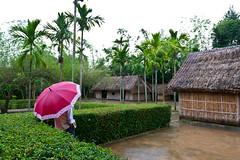 Birthplace of H Ch Minh (B E N N E) Tags: travel pink green wet rain umbrella person asia place vietnam palmtree birthplace minh vinh hoang tru h ch