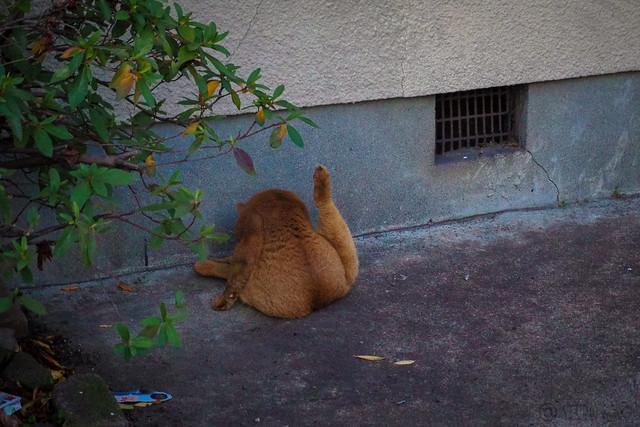 Today's Cat@2014-01-20