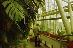 (The Integer Club) Tags: windows london film 35mm sebastian conservatory ferns expired olympustrip35 succulents hus 2013 lloydspharmacyiso200