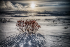 Lonesome willow (Yukonowsky) Tags: sun white snow mountains clouds landscape willow shrub hdr tundra {vision}:{sky}=0831 {vision}:{sunset}=0528 {vision}:{outdoor}=0618 {vision}:{text}=0507 {vision}:{clouds}=0752 {vision}:{ocean}=0738
