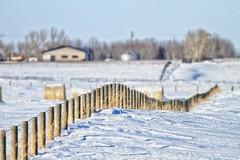 Fence Posts (John Andersen (JPAndersen images)) Tags: winter fence shadows 7d posts 400mm jpandersenimages