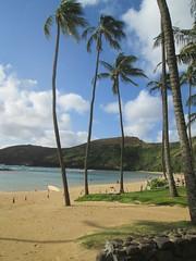 IMG_3182 (kapDave) Tags: hawaii bay oahu hanaumabay 2014
