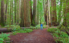 -Ancients- (Ismael Barrera - DIGISNAPSTUDIO) Tags: california trees usa nature oregon forest photography moss amazing path land salem redwoods recreation wisdom ancients copyrighted organism photgrapher ismaelbarrera digisnapstudio
