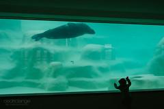 Let me grab you (Cedpics) Tags: ocean france aquarium kid emotion seal innocence enfant fr biarritz phoque enfance muséedelamer