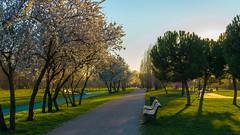 El Color de Abril (Ivan_Fle) Tags: espaa sun tree verde green luz beauty lights spring spain flickr arboles camino like ciudad valladolid paseo 1855 lightroom cesped castilla emount sonynex nexf3