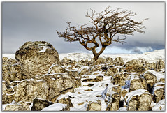 Limestone Pavement at Southerscales (Digital Wanderings) Tags: snow tree yorkshiredales limestonepavement southerscales