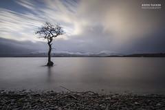 The tree (Keith Tucker Photography) Tags: longexposure tree water clouds scotland loch lochlomond millarochybay