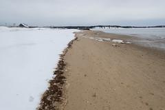 Snow's Edge at Low Tide (Jonathan Lurie) Tags: winter sea snow seaweed beach bay sand weed capecod tide low cape mayo lowtide cod wellfleet mayobeach