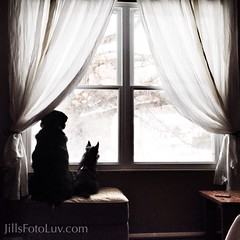 Snow watchers (jillsfotoluv) Tags: winter friends snow dogs window view buddies friendship silhouettes indoors sharing curtains canines