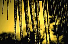 Winter III (Josh Rokman) Tags: winter snow macro ice nature weather boston outdoors frozen nikon snowy path snowstorm newengland freezing icicle snowing plow shovel snowfall blizzard shining sparkling icecrystals snowplow shoveling snowbank icycle bostonsnow snowshovel icecle snowmound bostonwinter newenglandwinter icemacro icecal d7000 bostonblizzard nikond7000 boston2015 icecel