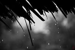 Goutte  goutte (Ye-Zu) Tags: voyage trip rain pluie koh mook thailande phangnga worldtour tourdumonde