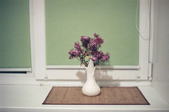 Night outside (S.Klyuchnikov) Tags: flowers window minolta 200 vista vase blinds agfa windowsill x700
