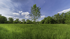 solo on the meadow (Blende1.8) Tags: wiese meadow baum tree solo solitr middle center zentral mittig natur nature museuminselhombroich nikon d750 sigma 1224mm spring frhling bluesky clouds wolken blauerhimmel wideangle carstenheyer hombroich