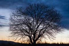 Tree and sky (anne.olaussen) Tags: natur skyer solnedgang farger motiver langskap