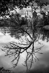 Reflection (MacaPDX) Tags: trees bw usa naturaleza lake tree nature water monochrome oregon reflections garden portland outdoors unitedstates bn urbannature pacificnorthwest northamerica pdx pnw crystalspringsrhododendrongarden treelovers