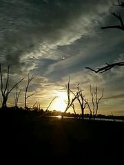 Green Lake Sunset Timelapse (florahaggis) Tags: trees sky sun lake clouds timelapse silhouettes samsung australia victoria greenlake drought mobilephone horsham liight pc3400 westernhighway wimmera cloudsstormssunsetssunrises