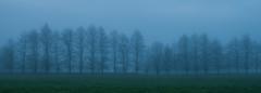 20160523_8369_1D3-40 Foggy Morning (johnstewartnz) Tags: canon eos westcoast 1740mm 1740 wonderfulworld westcoastnz yabbadabbadoo apsh 1dmarkiii 1d3 1dmark3