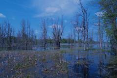 Iroquois National Wildlife Refuge (Kerryjwagner) Tags: outdoors wildlife wetland refuge iroquois