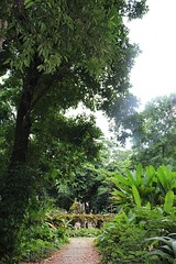 A tropical rainforest in Rio de Janeiro, Brazil (eltpics) Tags: park trees brazil riodejaneiro rainforest tropical eltpics