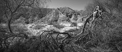 burned (ffoster) Tags: california blackandwhite landscape canyon desertlandscape saltonsea frankfoster sigmaquattro