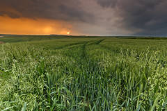 Rain  on the way . (Through Bri`s Lens) Tags: sun storm barley rain cereal crop wildoats brianspicer canon1635f4