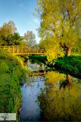 On Reflection (Rob Felton) Tags: bridge tree bedford outdoor bedfordshire serene brook felton backwater refelection willington greatouse robertfelton bedfordrivervalleypark elstowbrook