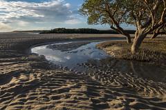 Mangroves and tidal creek rippled sand (--Welby--) Tags: trees light tree beach creek port coast sand smith mangrove ripples mangroves tidal broome