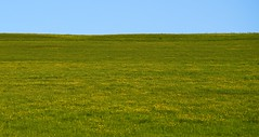 Buttercups! (SteveJM2009) Tags: uk sky colour grass may meadow wiltshire buttercups stevemaskell 2016 rothkoesque fieldscape naturethroughthelens