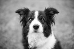 lola (desdemontrove) Tags: dog perro