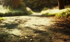 (Victoria Yarlikova) Tags: park lighting film nature analog darkroom 35mm vintage outdoors iso100 lomo dof grain scan zenit expired helios pellicola smallformat ferraniasolaris traditionalprocess