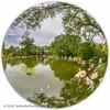 B36C6383 (WolfeMcKeel) Tags: park new city vacation fish eye nature water gardens garden mexico botanical spring high pond flora downtown desert landscaping albuquerque fisheye 2016