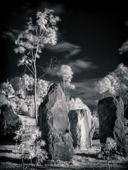 IR - Sydney's stone circle (Bright Sparrow) Tags: longexposure tree ir sydney infrared stonecircle barangarooheadlandpark