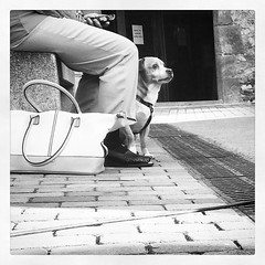 (Markus' Sperling) Tags: instagramapp square squareformat iphoneography uploaded:by=instagram inkwell dog perro gos anciana old woman fidelidad fidelity chucho street carrer calle