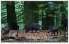 family (erikoo) Tags: wildlife wild zwijn zwijnen nature natuur bos wood