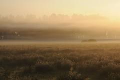 In der Ossenvenne; Norderstapel, Stapelholm (Chironius) Tags: stapelholm norderstapel schleswigholstein deutschland germany allemagne alemania germania    ogie pomie szlezwigholsztyn niemcy pomienie morgendmmerung sonnenaufgang morgengrauen  morgen morning dawn sunrise matin aube mattina alba ochtend dageraad zonsopgang   amanecer morgens dmmerung nebel fog brouillard niebla