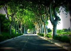 FRANCE - Provence, Platanenallee, 75156/6831 (roba66) Tags: road travel trees france tourism reisen frankreich urlaub visit explore provence avignon francia bume franca voyages allee camargue camarque strase provenca platanenalle roba66