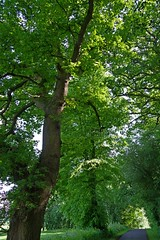 1271-04L (Lozarithm) Tags: 28105 mileelm bowood treesshrubs k1 paths pentax zoom