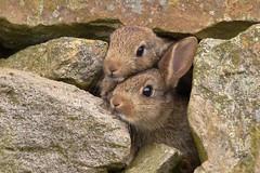 Rabbits (charlie.syme) Tags: cute rabbit bunny nikon