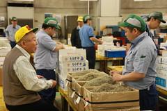 IMG_5896 (tsaaby) Tags: japan fishmarket fisk fiskemarked tmfstudietur