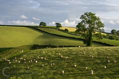 Hele Payne Farm