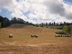 CRW_7501-1 (03TTAM) Tags: landscape toscana paesaggi viafrancigena
