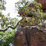 Animal Kingdom 9-25-2015-36 thumbnail
