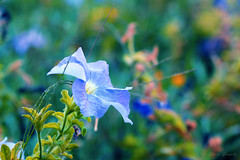 IMG_9844 (nelson_tamayo59) Tags: flores jardin canarias tenerife