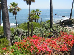Laguna Beach, Calif. (Dan_DC) Tags: orangecounty california southerncalifornia park seaside lagunabeach landscaping flowers pacificocean americanscenery usa unitedstatesofamerica