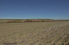 Barren (Trevor Sokolan) Tags: railroad canada field train farm tracks rail railway trains canadian crop sk prairie saskatchewan ge prairies railfan trainspotting potash fifelake generalelectric hoppers gwr railfanning greatwestern b408w gwrs