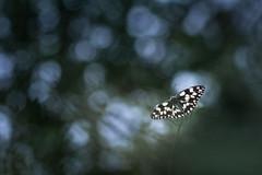 (Cyril Peron) Tags: nature