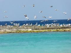 Gabbiani (carlo612001) Tags: sea seagulls bird nature birds freedom wings mediterraneo mare estate free gabbiani gabbiano mediterraneansea scoglio flayng